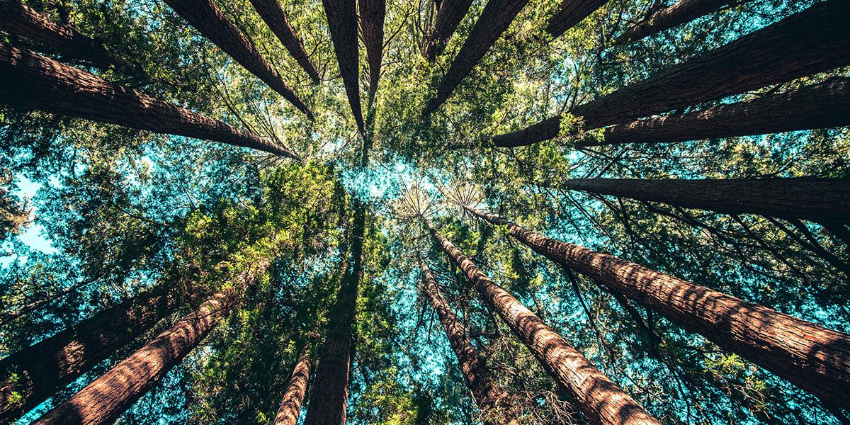 blog_sustainabilty